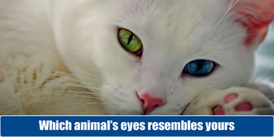 Which Animal Eyes Resembles Yours