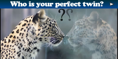 Who Is Your Perfect Twin?