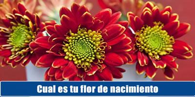 Cual es tu flor de nacimiento